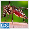 Mosquitoes can carry viruses, like West Nile, Zika, dengue, and chikungunya. In this podcast, Mr. Hubbard will teach you and his neighbor, Laura, ways to help reduce the number of mosquitoes outside your home. Tips include eliminating areas of standing water where mosquitoes lay eggs and using larvicides to kill young mosquitoes.